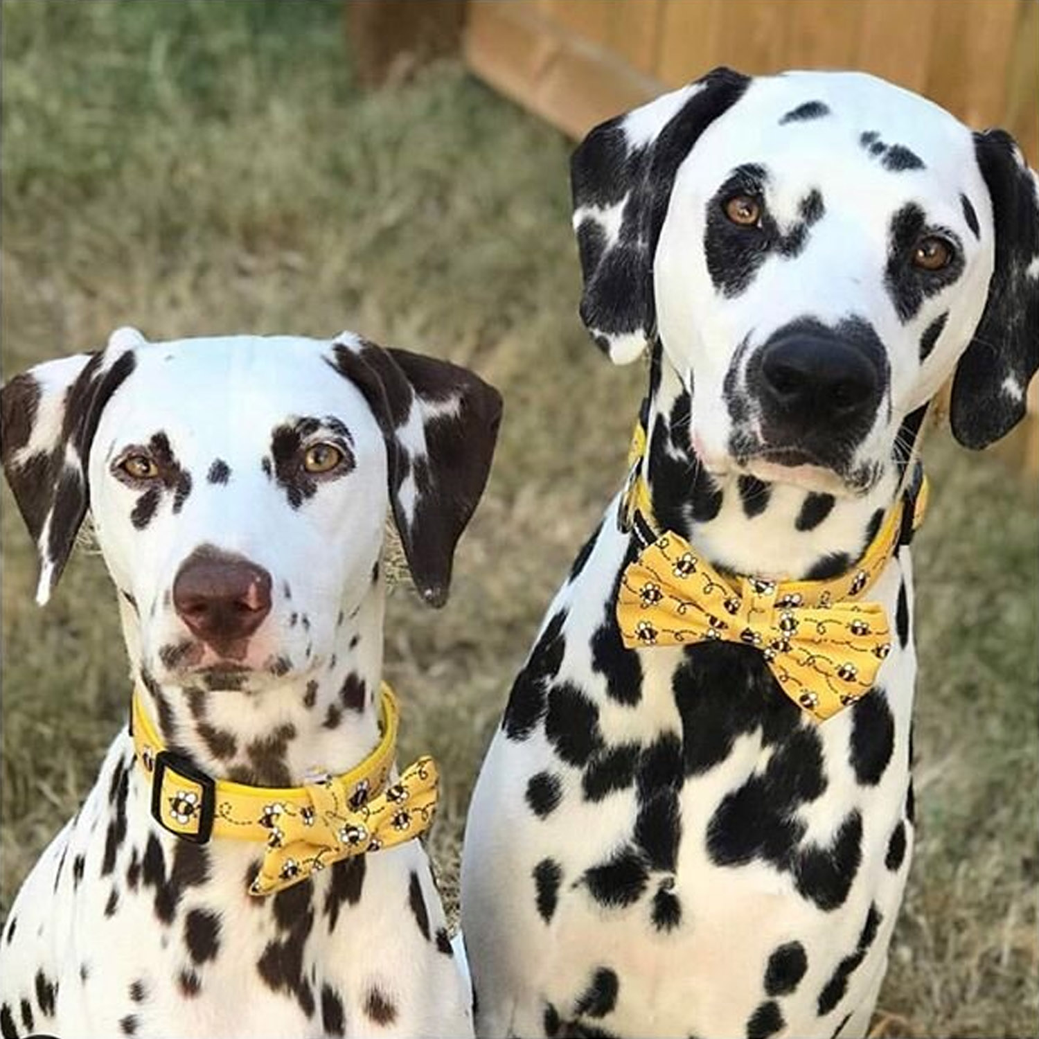 Collars (Dog Only)