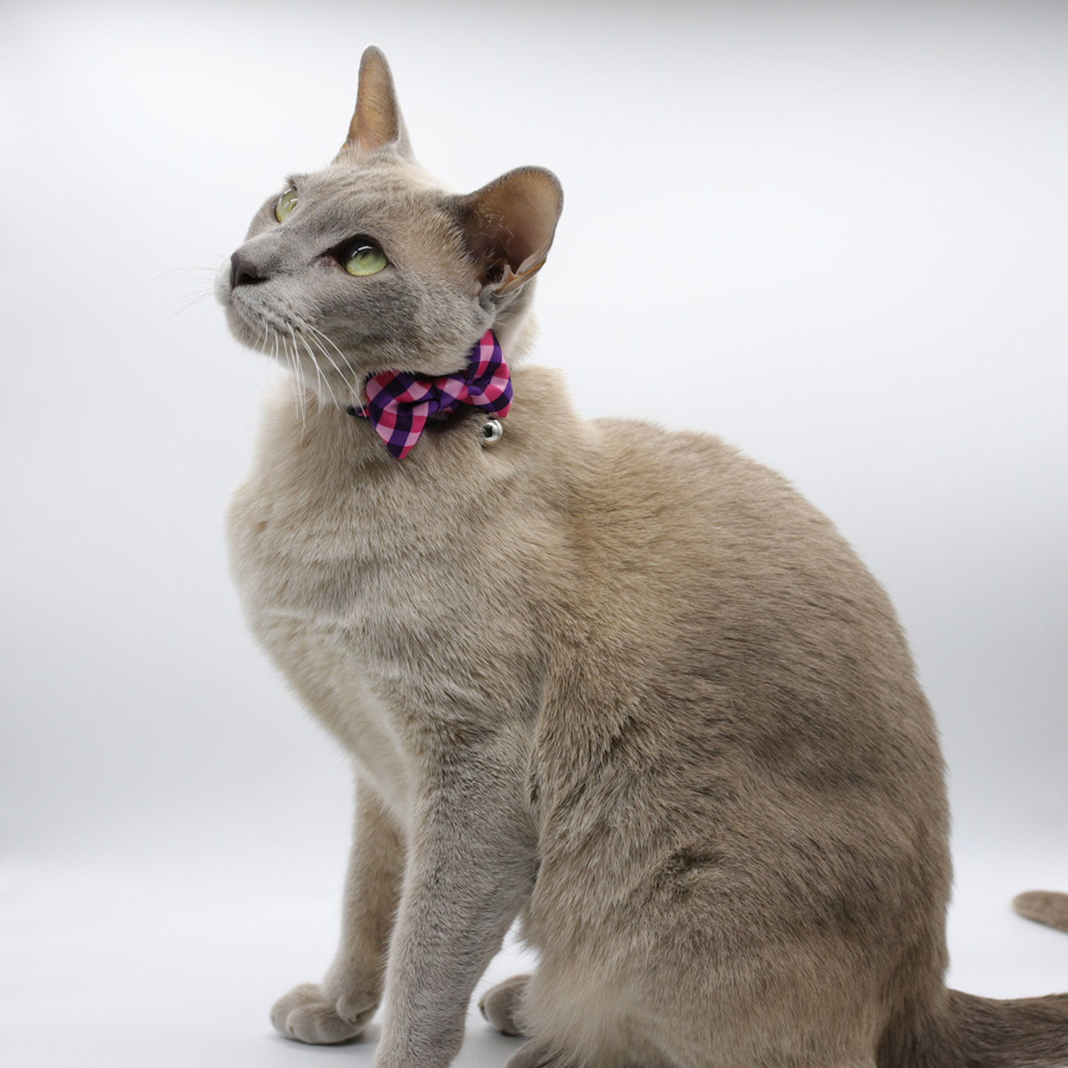 Collars (Cat Only)